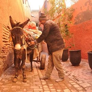 Afryka maroko zdjęcia z podróży