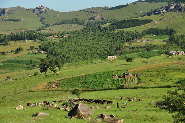 afryka swaziland zdjecia