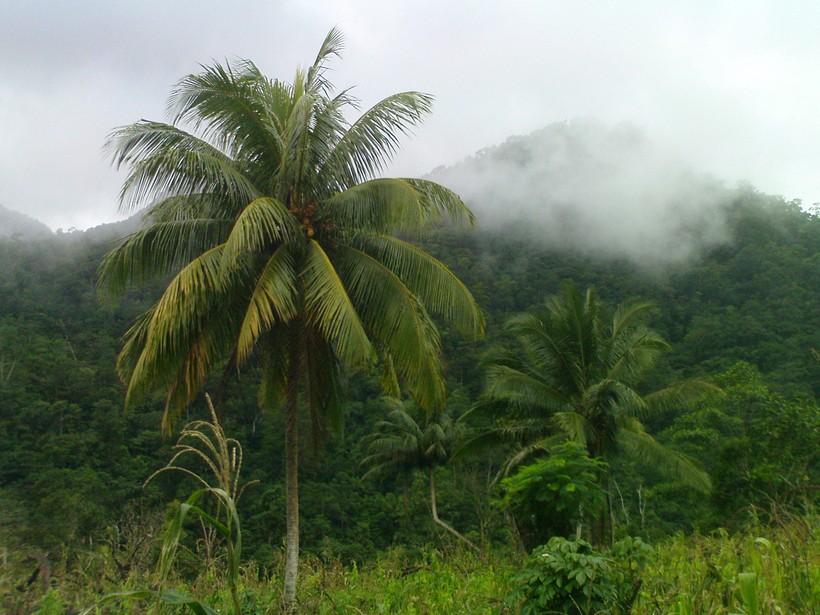ameryka południowa honduras zdjecia z podróży