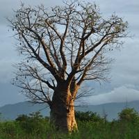 Zdjęcia z podróży po Malawi