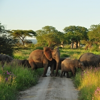Zdjęcia z podróży po Tanzanii